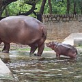 Mother And Child by Parveen Shrivastava