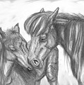 Mother And Foal by Crystal Suppes