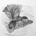 Mother Cat Washing Kittens by Phyllis Tarlow