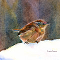 Mother Wren by Pamela Parsons