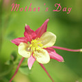Mothers Day Card 5 by Michael Peychich