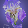 Mothers Day Card 7 by Michael Peychich