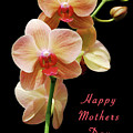 Mothers Day Card 8 by Michael Peychich