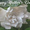 Mother's Day Gardenia by Teresa Wilson