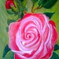 Mothers Day Rose by David Richardson