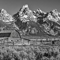Moulton Cabin - Grand Tetons II by Sandra Bronstein