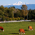 Mount Baker From Langley Bc by Marion McCristall