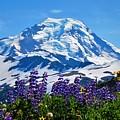 Mount Baker Wildflowers by Daniel Mazzei