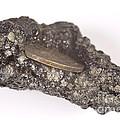 Mount Etna Souvenir Coin In Lava by Ted Kinsman