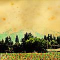 Mount Hood by Lora Battle