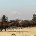 Mount Hood Over The Flats by Mary Masters