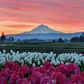 Mount Hood Sunrise by Mark Whitt