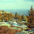 Mount Monadnock Spruce Injury by John Burk