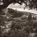 Mount Of Olives by Granger