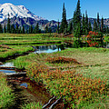 Mount Rainier- Upper Tipsoo Lake by Michael Sedam