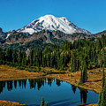 Natures Reflection - Mount Rainier by Michael Sedam
