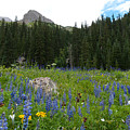 Mount Sneffels Lupine Landscape by Cascade Colors