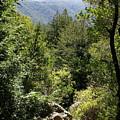 Mount Tamalpais Forest View by Ben Upham III