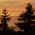 Mount Tamalpais State Park by Soli Deo Gloria Wilderness And Wildlife Photography