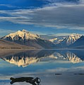 Mountain And Driftwood Reflections by Adam Jewell