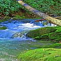 Mountain Appalachian Stream by The American Shutterbug Society