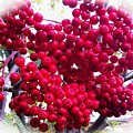 Mountain Ash Berries Vignette by Barbara Griffin