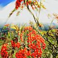Mountain Ash Sunshine by David A Lane