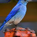 Mountain Blue Bird by Parker