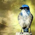 Mountain Bluebird by Marty Koch