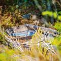 Mountain Boat by Jody Lane