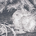 Mountain Cottontail by Shevin Childers