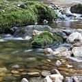 Mountain Creek Spring Nature Scene by Goce Risteski