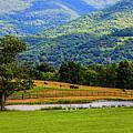 Mountain Farm With Pond by Doug Berry