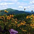 Mountain Flowers by Bryce Clark