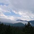 Mountain Forest by Scott Sanders