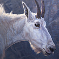 Mountain Goat Study by JQ Licensing
