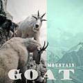 Mountain Goats by Zena Zero