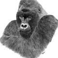 Mountain Gorilla by Rosanna Maria