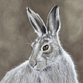Mountain Hare by Nicola Colbran