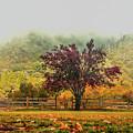 Mountain Haze In A Oak Glen Autumn by Tommy Anderson