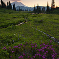 Mountain Heather Sunset by Mike  Dawson