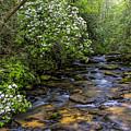 Mountain Laurels Light Up Panther Creek by Barbara Bowen