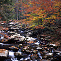 Mountain Leaves In Stream by George Ferrell