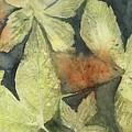 Mountain Leaves by Jean Blackmer