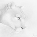 Mountain Lion by Andrea Angulo