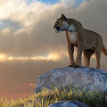 Mountain Lion by Daniel Eskridge