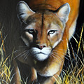 Mountain Lion In Tall Grass by Jon Quinn