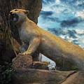 Mountain Lion - Paint Fx by Brian Wallace