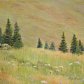 Mountain Meadow by Lynn Quinn