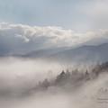 Mountain Mist by Carol Cavalaris